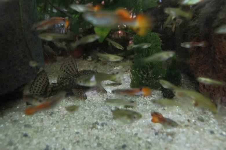 Flicki Aquarium